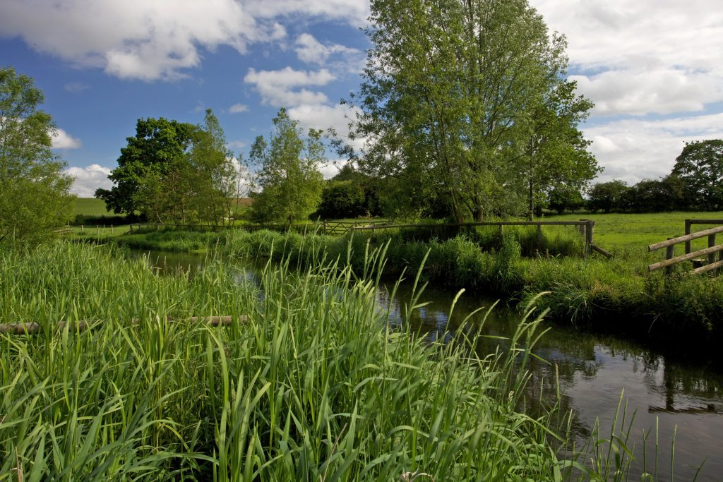 Norfolk chalk stream; the Bintry Mill Trout fishery on the River Wensum