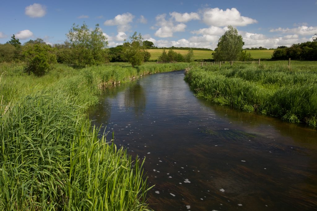 The River Wensum in early summer